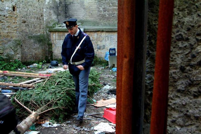 Nel 2002 l'albero donato da Antonio Barbaro venne ritrovato dopo il furto in Vico Polito