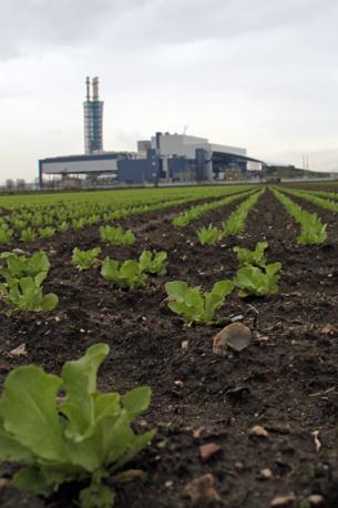 Coltivazione di insalata sotto al Termovalorizzatore di Acerra