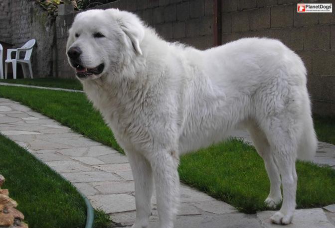 I cani di grossa taglia - CorrieredelMezzogiorno