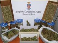 Coltivava marijuana in una serra, 43enne di Alezio finisce agli arresti