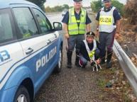 Cucciola legata al guardrail, la polizia la nota e poi l'adotta