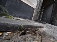 Napoli, bottiglia molotov lanciata tra caserma della Polizia e bar