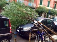 Pioggia e vento forte, Bari si allaga Distacco di intonaci e caduta d'alberi