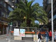 Bari, parte l'espianto delle palme Via Sparano cambierà volto