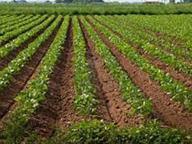Agricoltura, indagine di Coldiretti«2500 terreni in mano alla mafia»