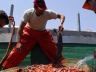 Pesca, per 30 giorni fermo biologico dal sud della Puglia alla Liguria