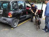 Il fiuto del cane antidroga fa arrestare trafficante a Trani