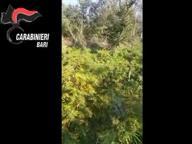 Droga: 4 arresti nel Barese Sequestro per un milione