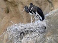 Monteverde, l'oasi delle cicogne messa a rischio dal parco eolico