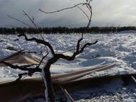Masserie isolate e colture distrutte La Cia: stato di calamità per le perdite