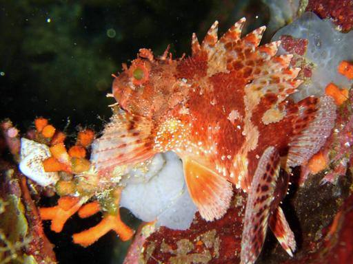 Punta Campanella, nel parco marino cresce la biodiversità: 151 specie