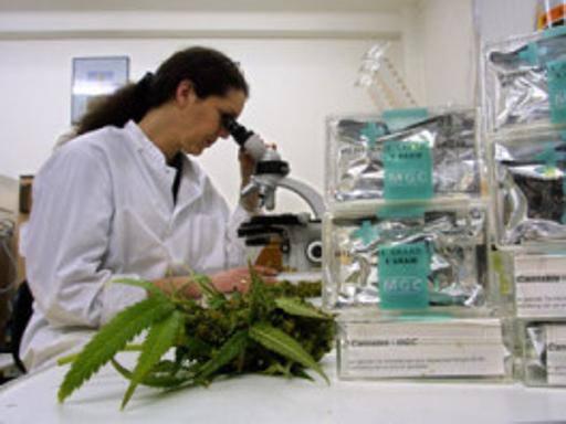 Cannabis, il Cdm impugna la legge della Regione Campania